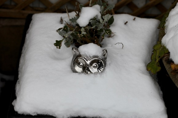 Owl with snow cap