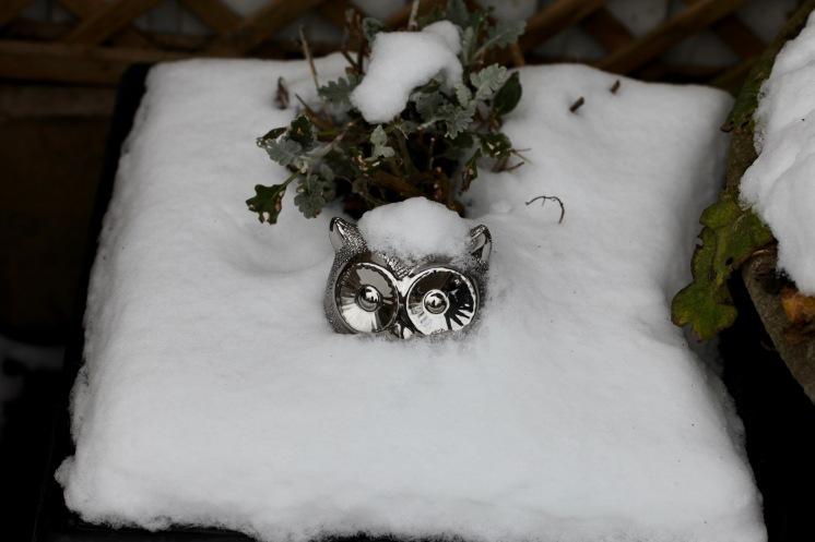 Owl with snow cap