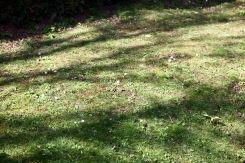 Daisies and shadows