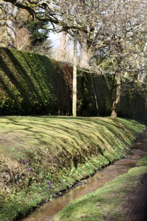 Lower Sandy Down, stream, shadows, crocuses, primroses