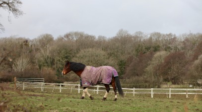 Horse in rug