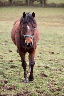 Pony, bridle