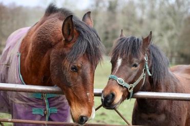 Horse and pony