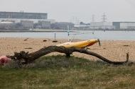 Driftwood, Southampton Water