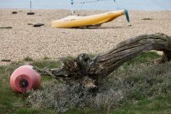 Driftwood, buoy