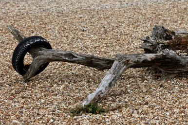 Driftwood and tyre
