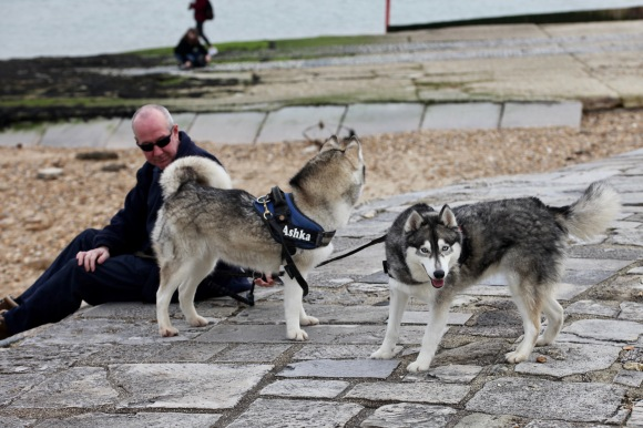 Man and huskies