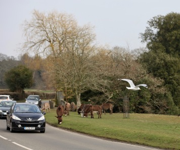 Gull and donkeys