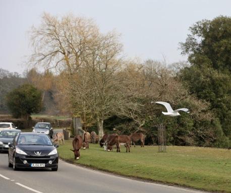 Gull and donkeys