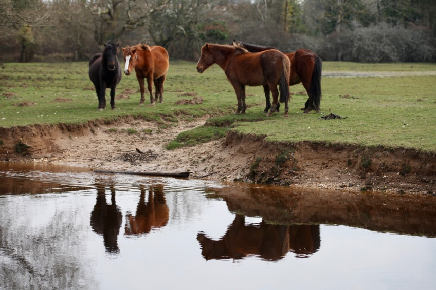 Ponies and reflections