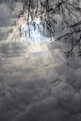 Sun, clouds, trees reflected