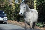 Pony through windscreen