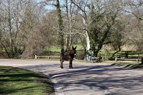 Donkey on road - cyclist passing