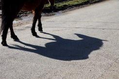 Pony's shadow