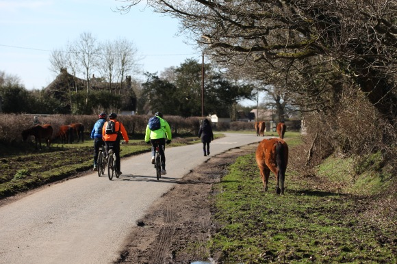 Cyclists, walker, ponies