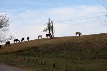 Ponies on hillside