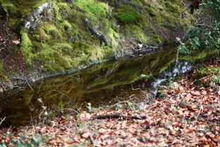 Reflections in ditch
