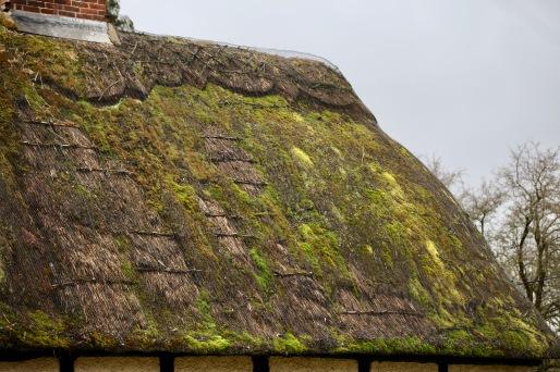 Moss on thatch