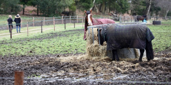 Horses feeding on hay
