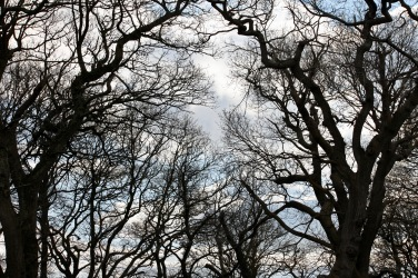Branches and sky