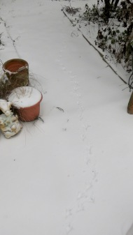 Birdprints in snow
