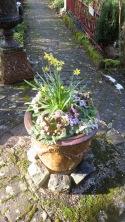 Daffodils and Brick Path