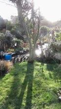 Garden view across grass patch