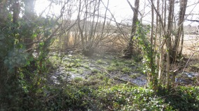 Marshy land,reedbeds
