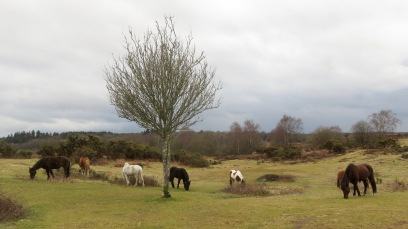 Ponies in landscape