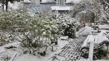 Garden in snow