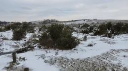 Moors in snow