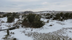 Moors in snow