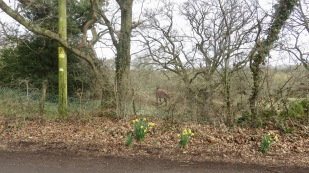 Daffodils and horse in rug