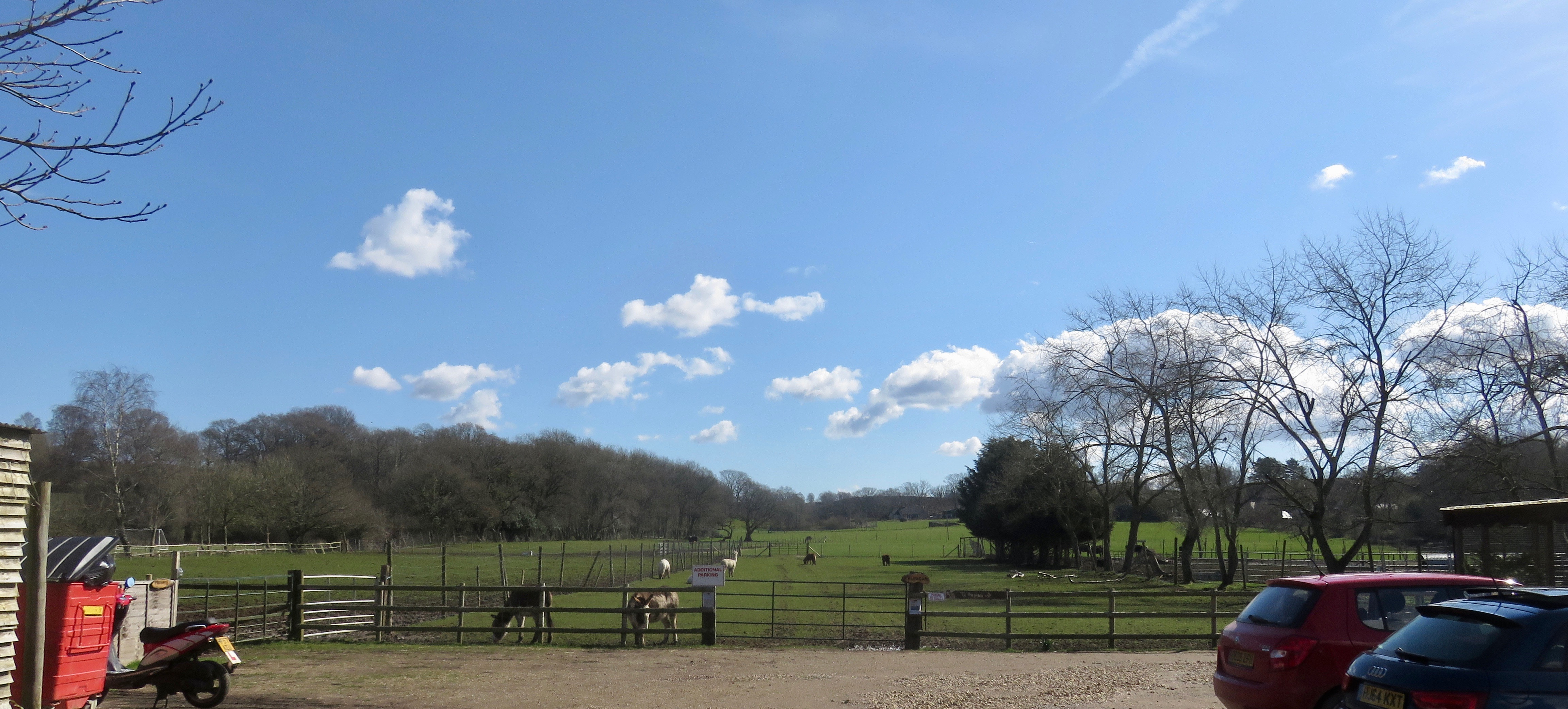 Paddocks with donkeys and alpacas