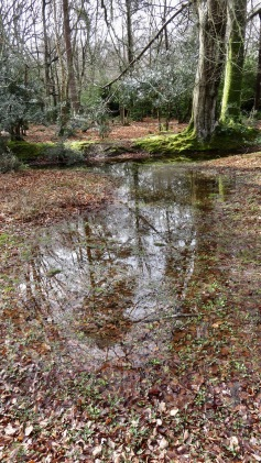 Forest scene with trees reflected in pools