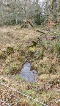 Forest scene, fallen trees, pool