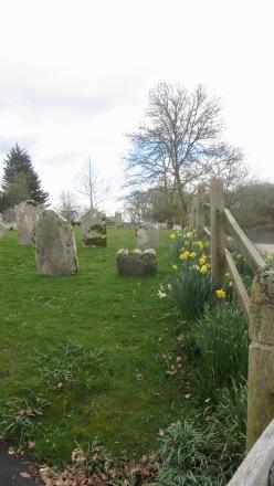 Daffodils in churchyard
