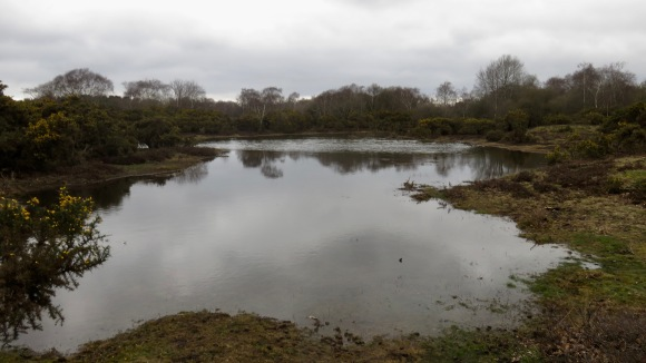 Waterlogged moor