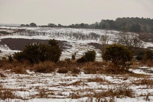Snow on moor