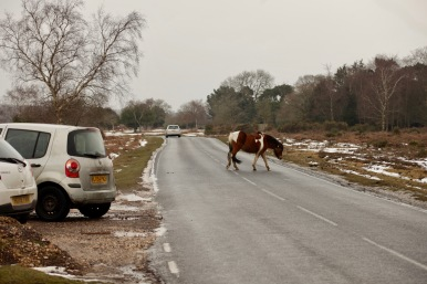 Pony crossing road