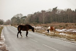 Ponies crossing road
