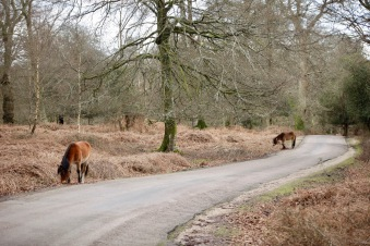 Ponies on Boldrewood Drive