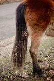 Pony's tail