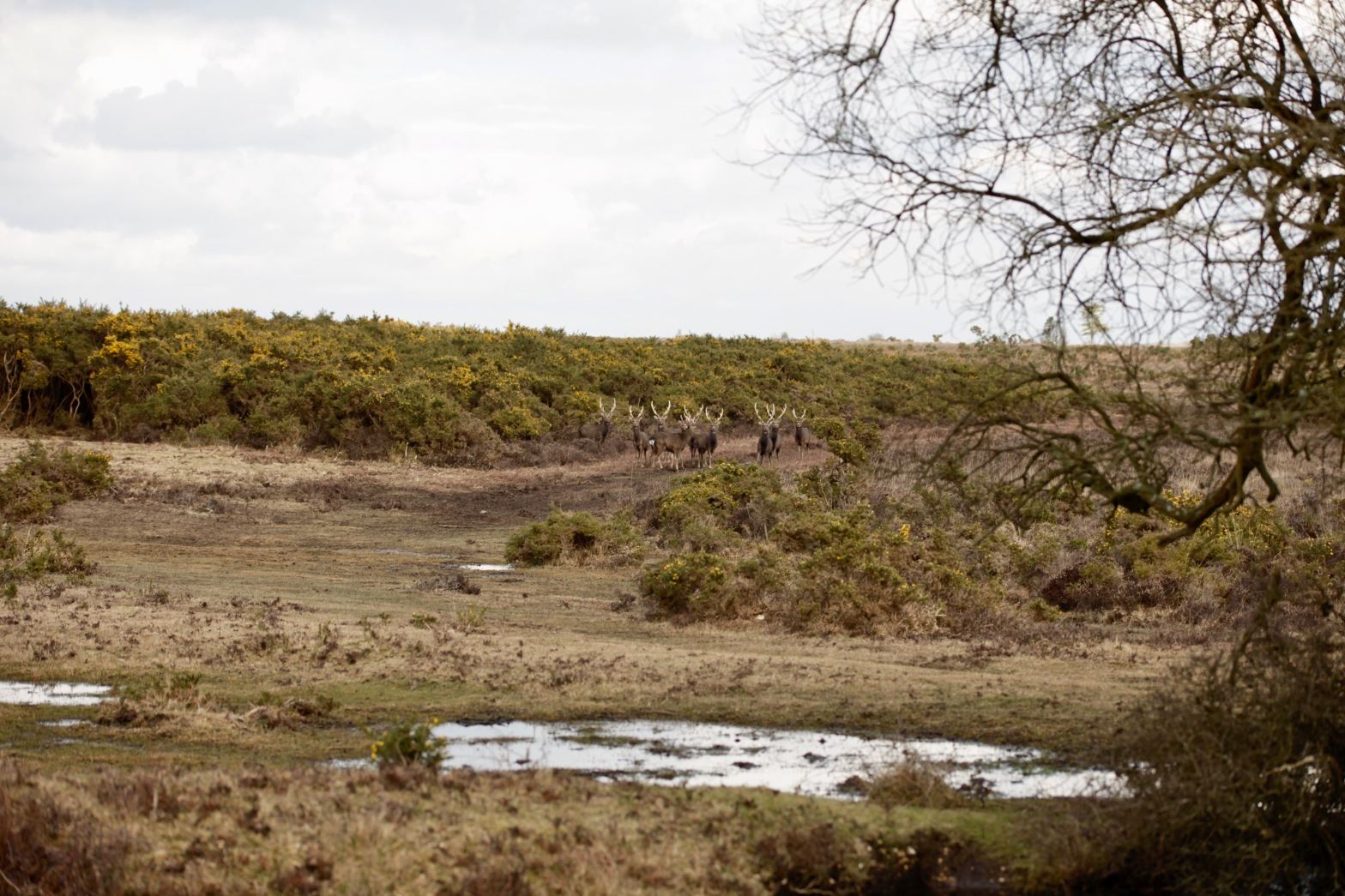 Stags in landscape 2