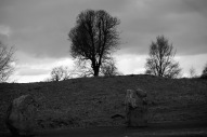 Trees above Avebury Stones