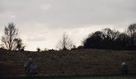 Trees above Avebury Stones