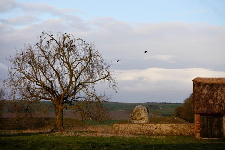 Jackdaw tree and Stone