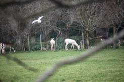 Deer and gull