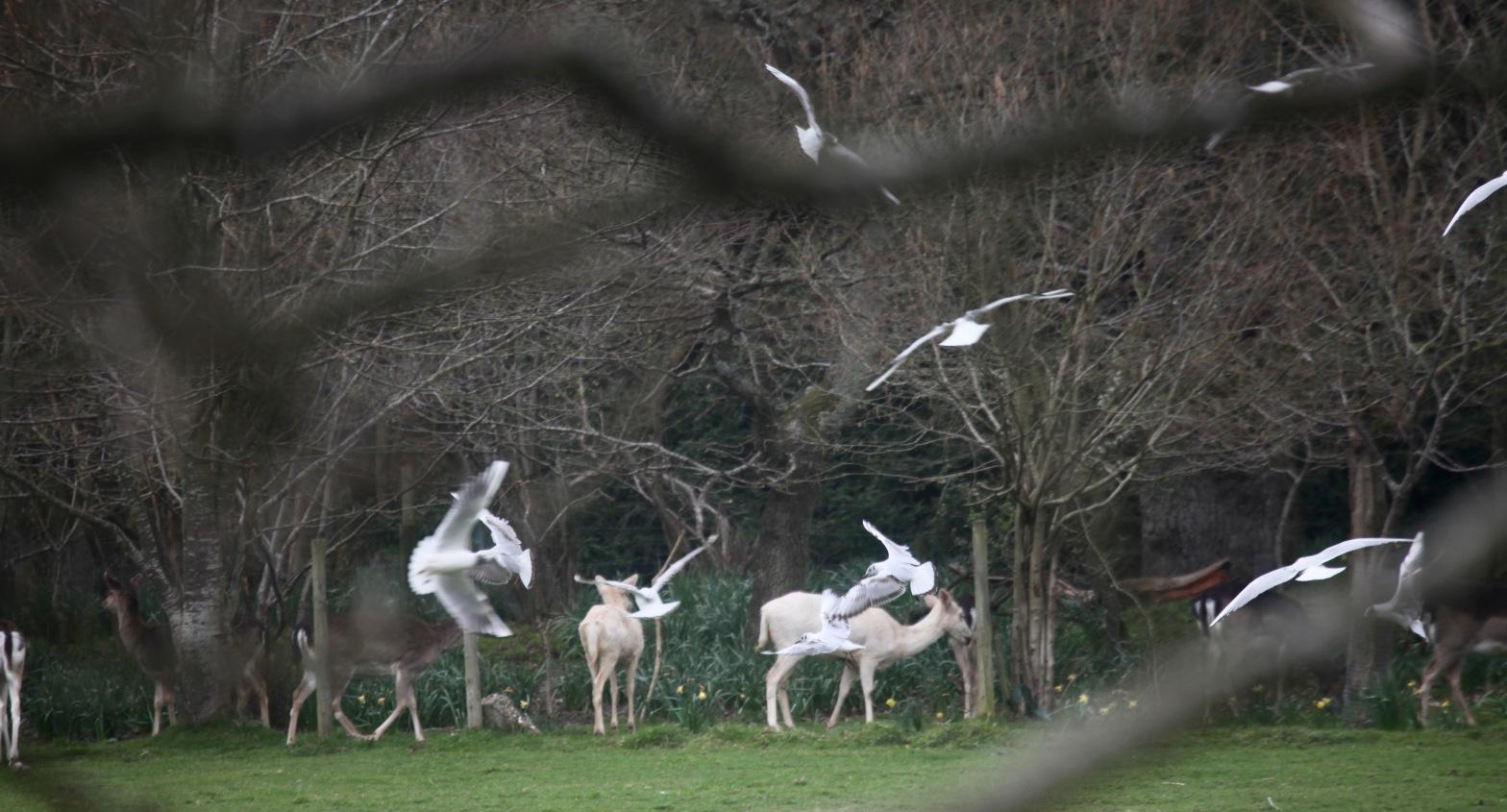 Deer and gulls