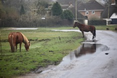 Ponies and reflection on road pool